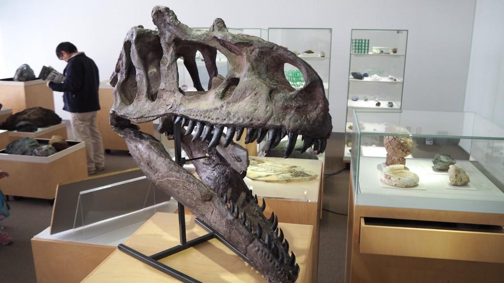 東京工業大学博物館の展示風景(2階展示室「地球史」)。